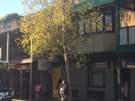 Very Prominent Glebe/ Broadway Ground Floor 140sqm =avail End Jan 2017