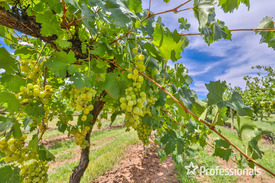 11.64ha Wine Grape Property