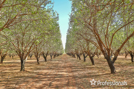 Substantial Almond Orchard On 13.26 Hectares